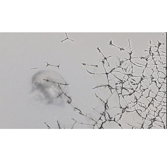 Acrylglas, Plexiglas, Acryleis, project a, christopher baer, bochum, bedrucktes acrylglas, eisoptik, frozen look, eis, kunsteis, design